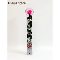 Rosa Fucsia Preservada